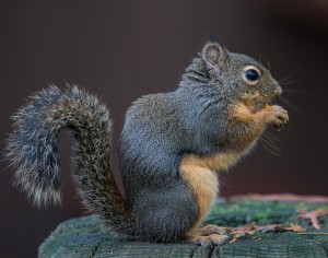 PattyBooth_CAVE_Squirrel