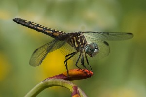 12A1_PattyBooth_CAVE_Dragonfly