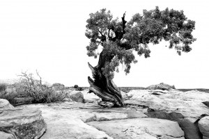 59_10g1_curtcollins_cave_treeinrock